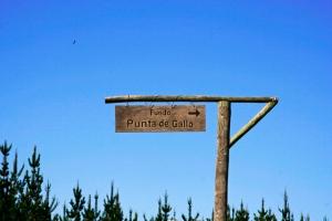 Punta de Gallo